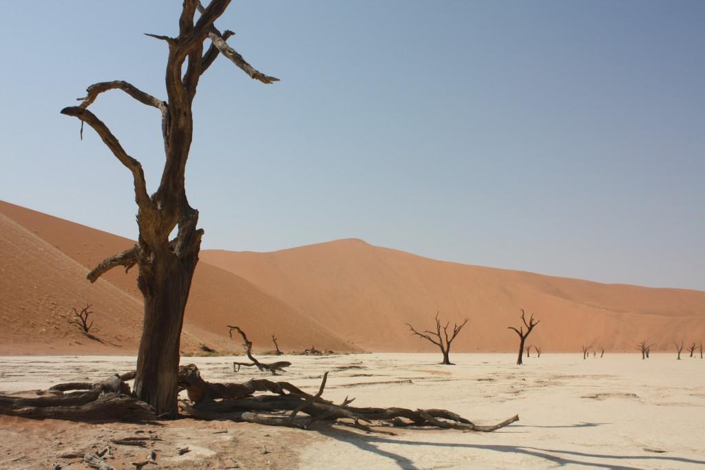 Eldgamle, inntørkede trær i Dead Vlei i den namibiske ørkenen.