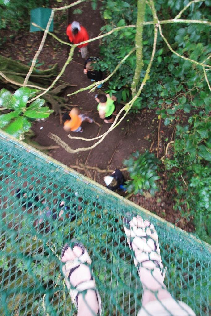 Jeg ser ned på de andre etter å ha klatret opp inni treet.
