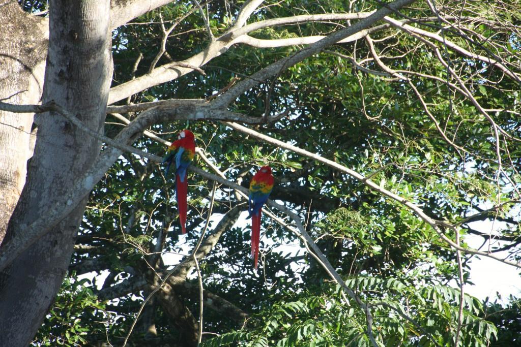På det første stedet vi stoppet, dukket det plutselig opp en flokk med svære papegøyer.