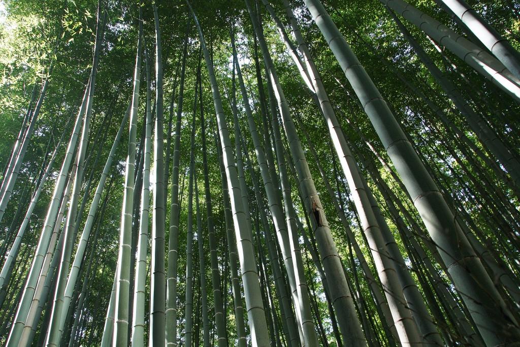 Japan - Kyoto - Arashiyama