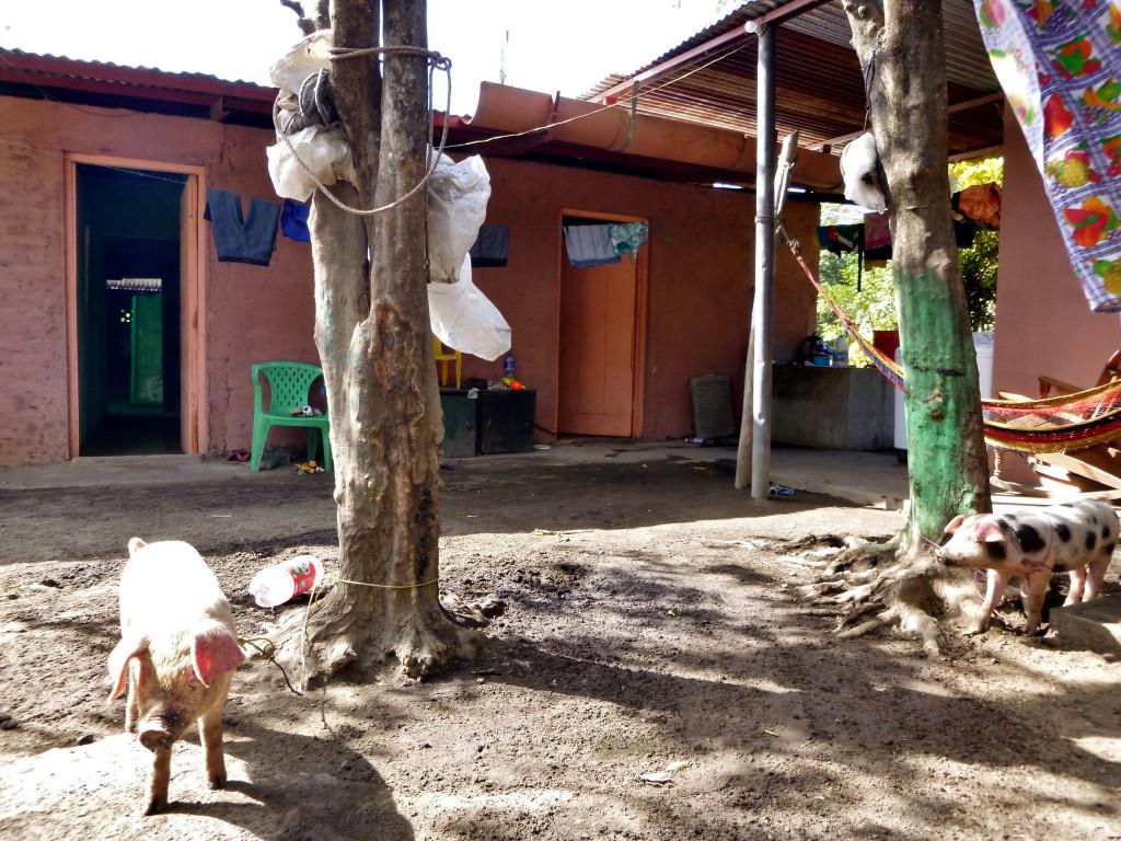 Nicaragua - Ometepe