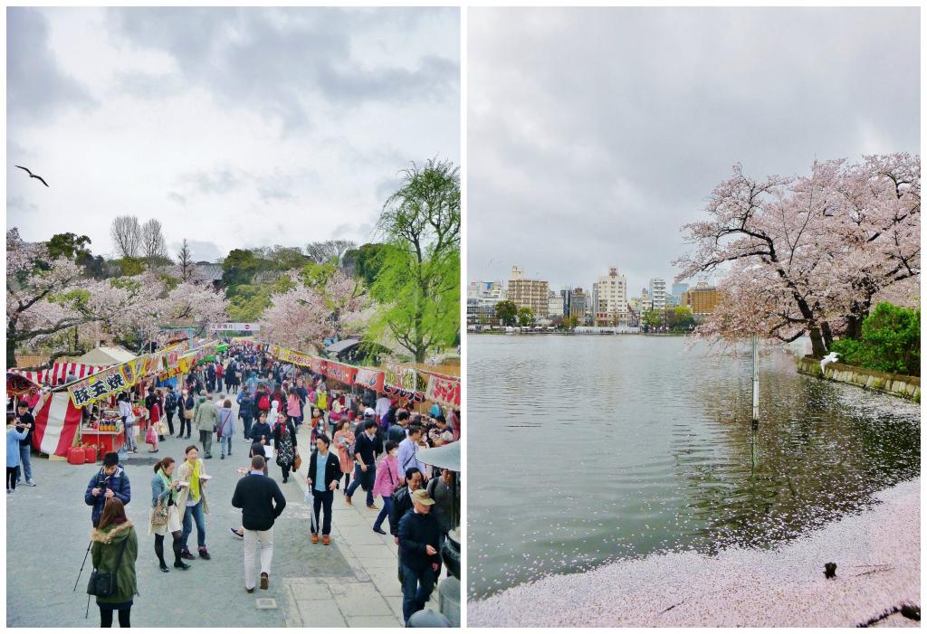 Collage kirsebærblomstring 4