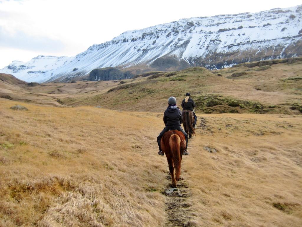 Island - Skogar