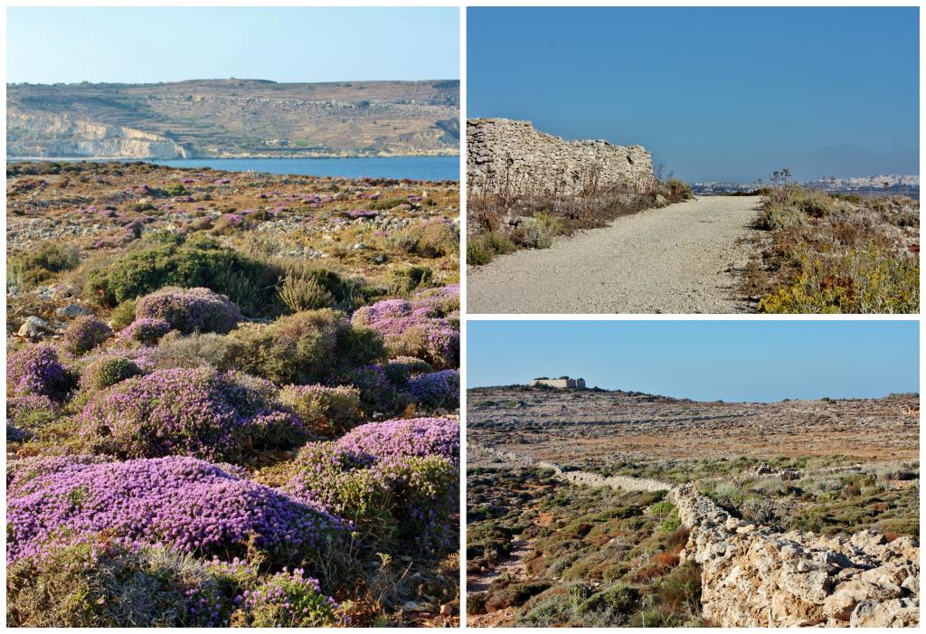 Collage Malta 14