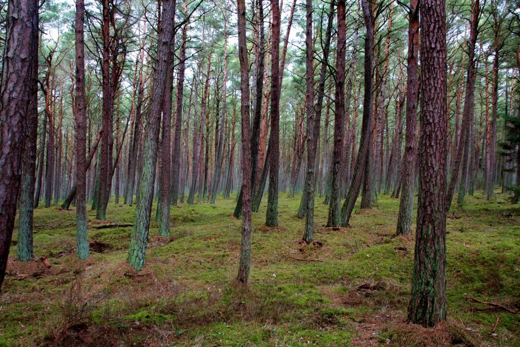 Polen - Slowinsky nasjonalpark