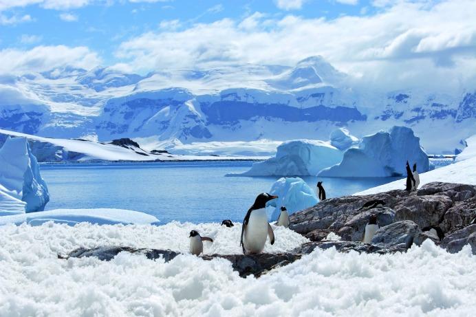 Antarktis6Berge_pinguine