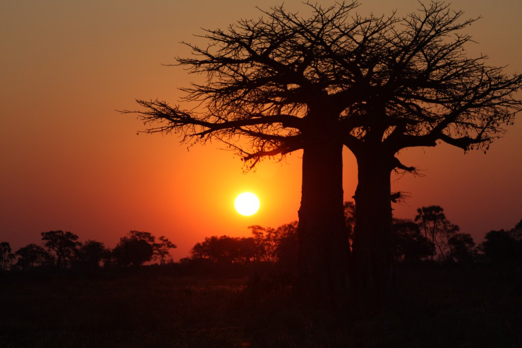 Botswana - Okavangodeltaet