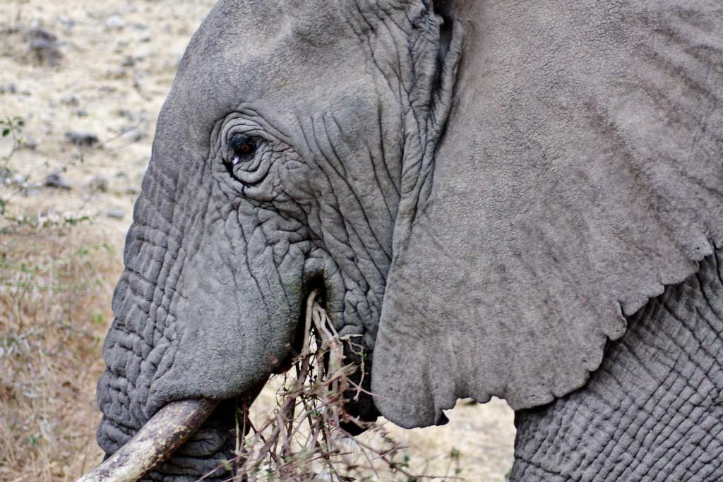 Tanzania - Ngorongorokrateret