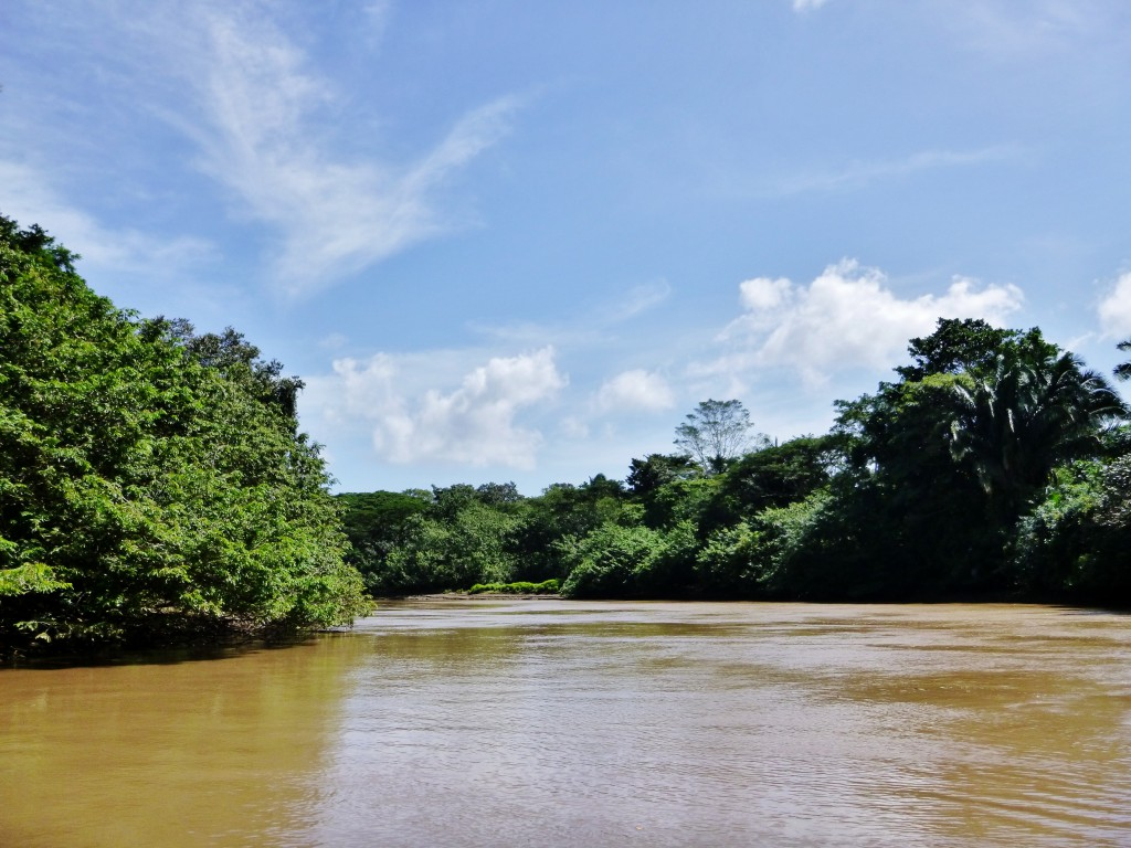 Costa Rica- (58) – Kopi Cano Negro Wildlife Refuge
