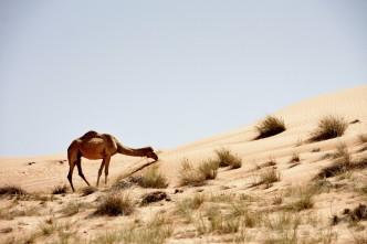 IMG_1586 – Kopi - Wahiba Sands - Oman
