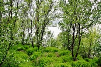 IMG_8917 – Kopi - Island - Hallormsstadaskogur