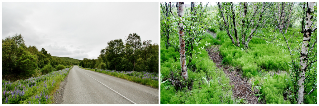 Collage Hallormsstadaskogar