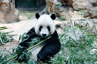IMG_3520 – Kopi - Kina - Beijing - Zoo