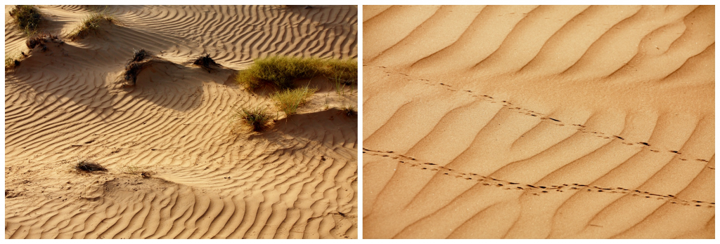 Oman - Wahiba Sands - Collage ørken 1