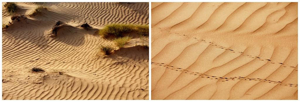 Oman - Wahiba Sands - Collage ørken 1