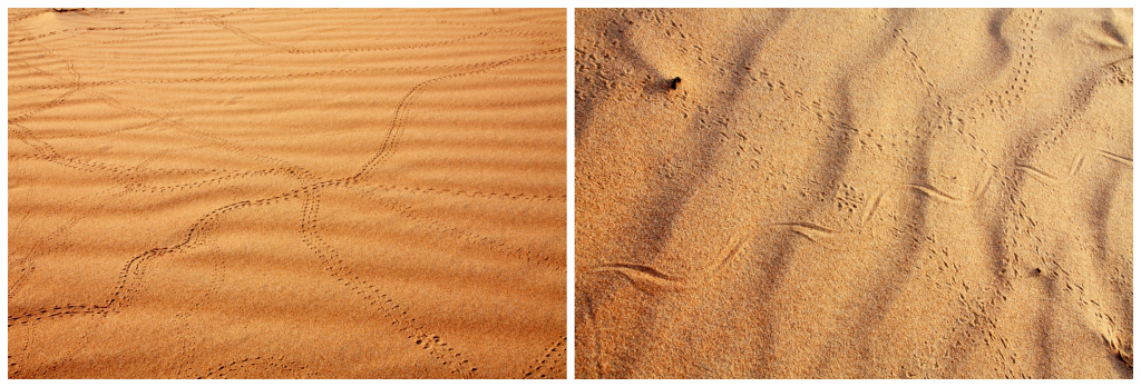 Oman - Wahiba Sands - Collage ørken 3