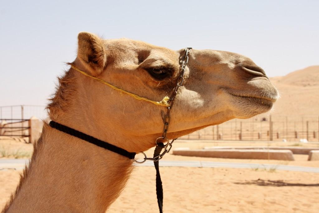 Oman - Wahiba Sands - IMG_1555 – Kopi
