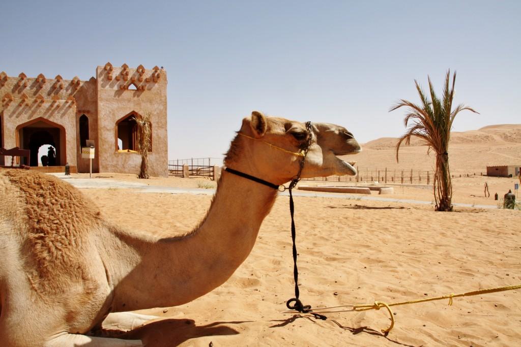 Oman - Wahiba Sands - IMG_1561 – Kopi