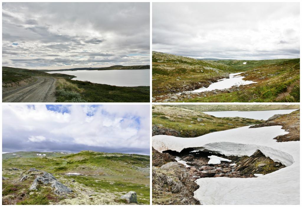 Collage Hardangervidda
