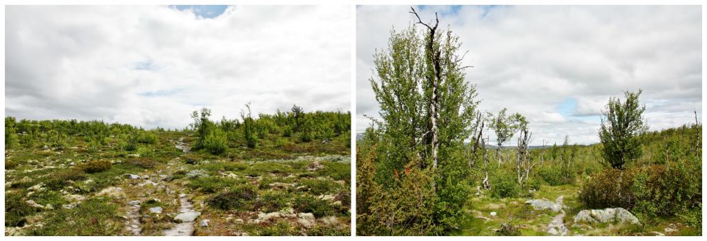Collage Hardangervidda 2