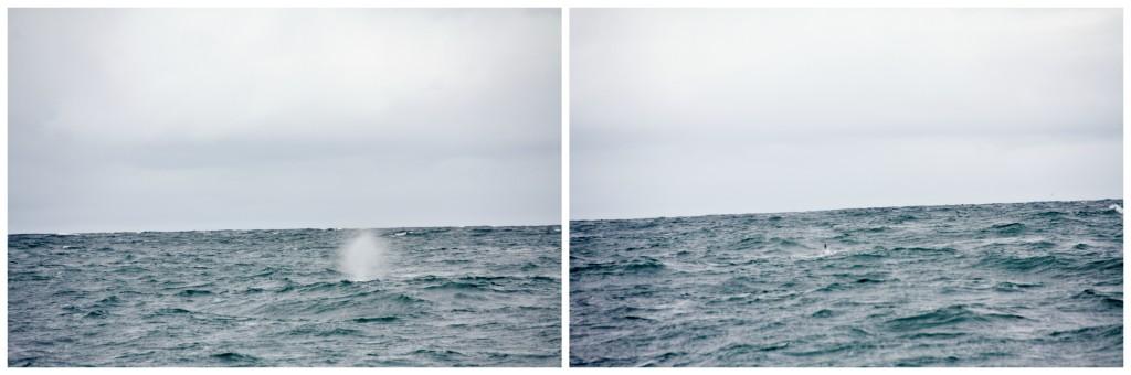 Collage hvalsafari 1