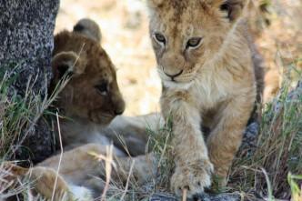 Tanzania - Serengeti - (233) - Kopi