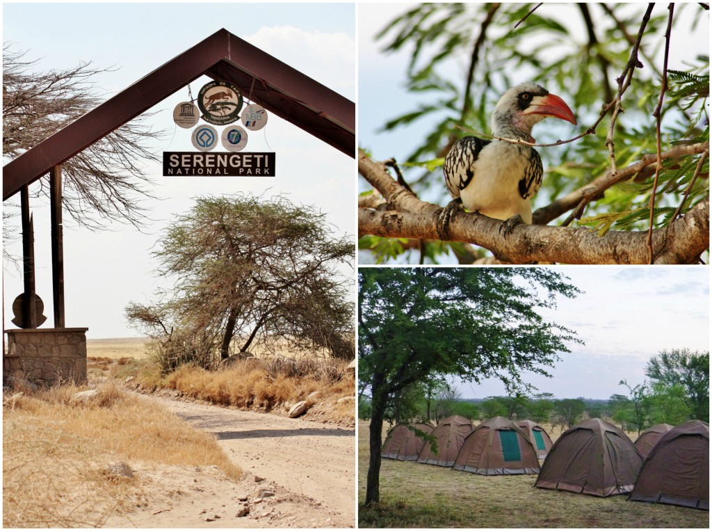 Collage Serengeti 1