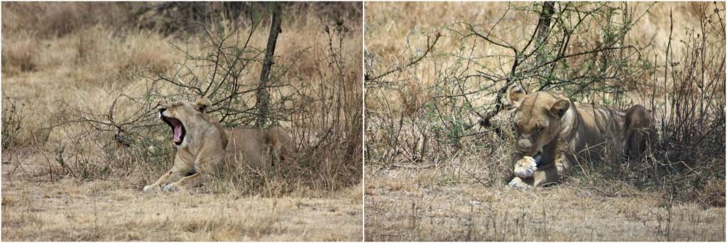 Collage Serengeti 2