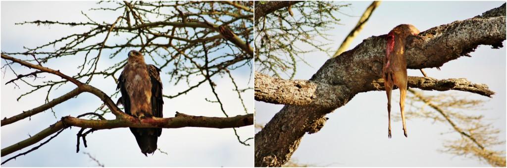 Collage Serengeti 4