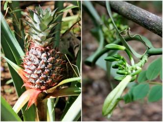Tanzania - Zanzibar - Collage krydderplantasje 1