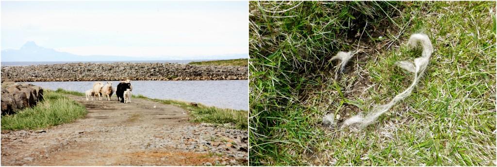 Island - Collage Kálfshamarsvík 2