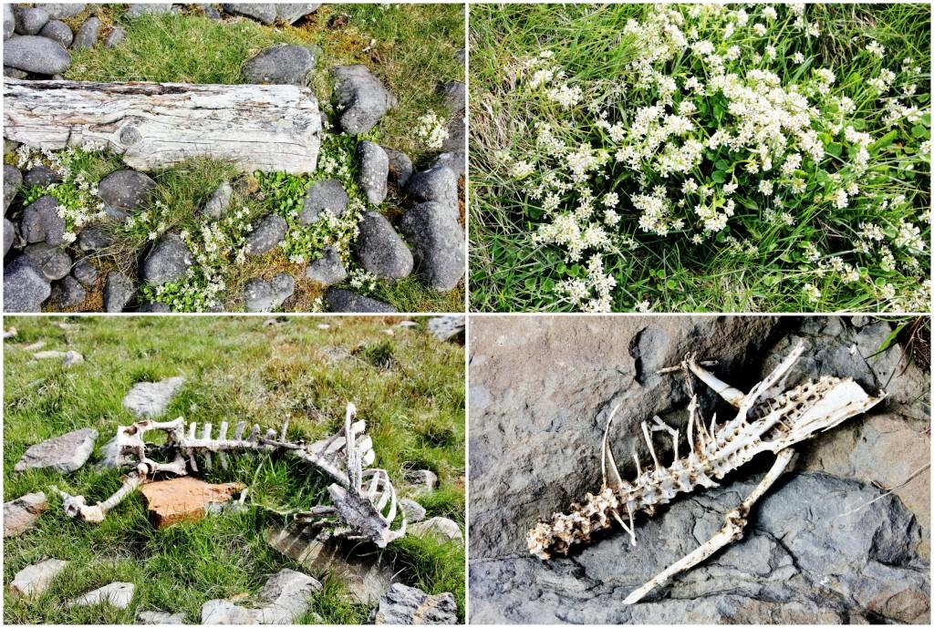 Island - Collage Kálfshamarsvík 9