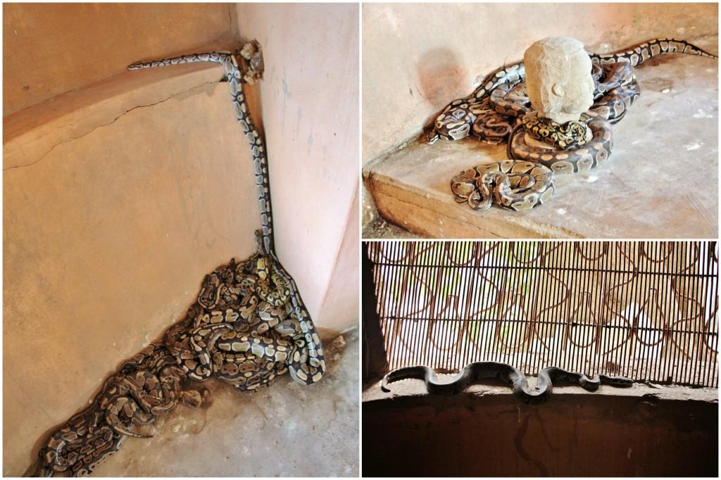 Collage Ouidah 2