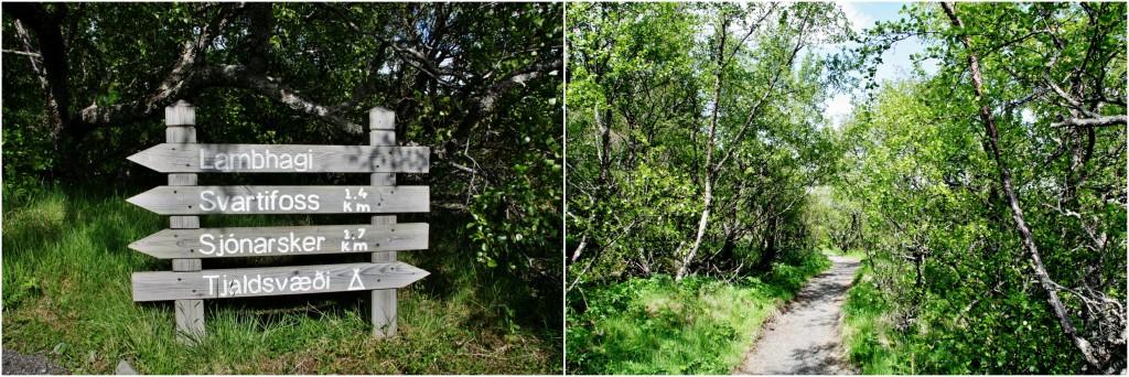 Island - Collage Svartifoss 1