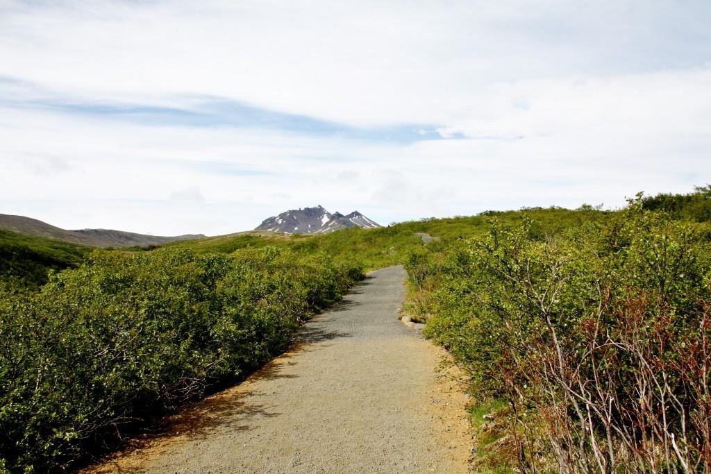 Island - Svartifoss - IMG_8298 – Kopi