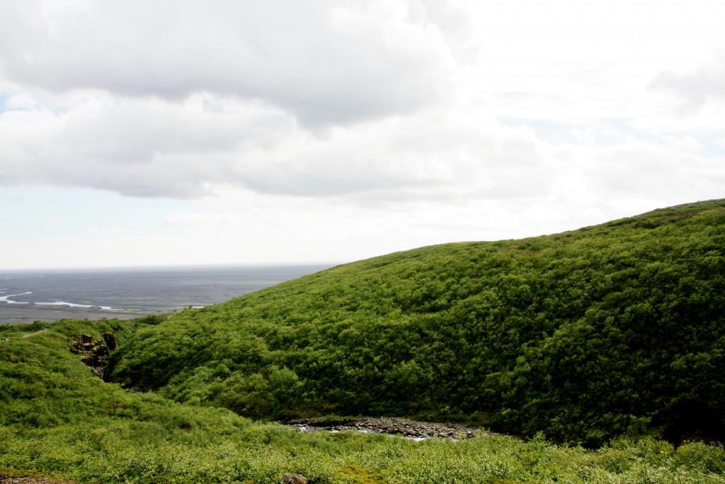 Island - Svartifoss - IMG_8381 – Kopi