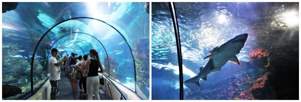 Collage - Akvariet i Barcelona
